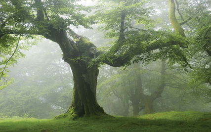 Image of a brightly lit rtree covered in moss and green leaves.